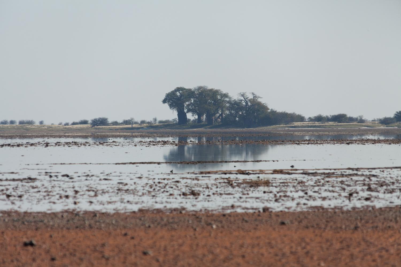 Botswana 2017 (Nxai Pan Nationalpark, Baines Baobabs)