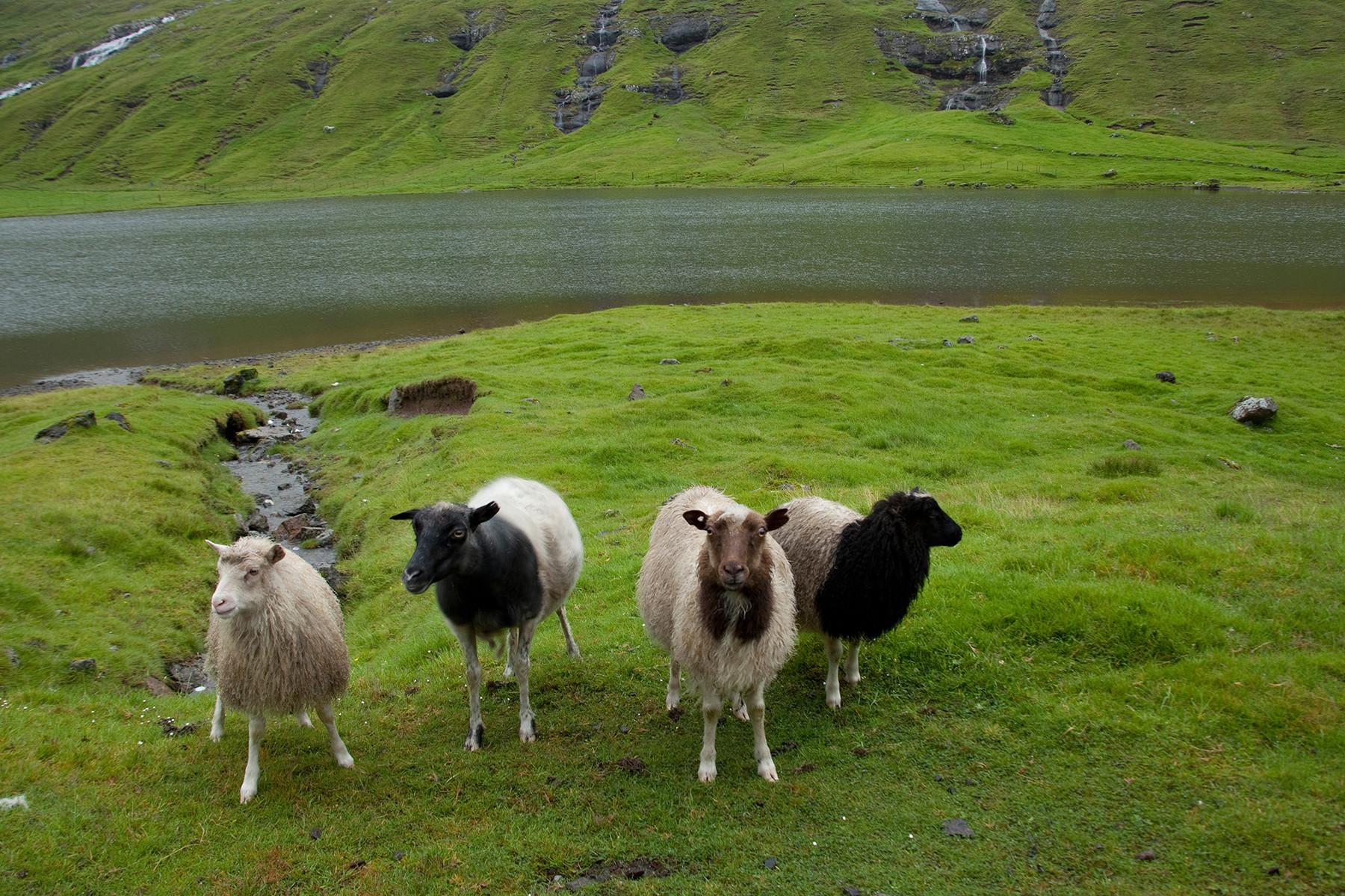 Island 2014 (Färöer Inseln)