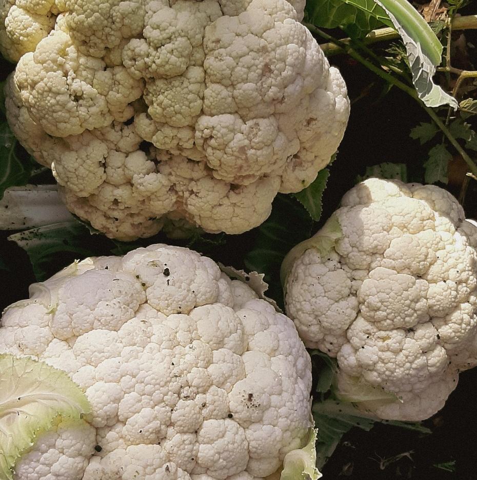 Gemüse in Rezepten verstecken