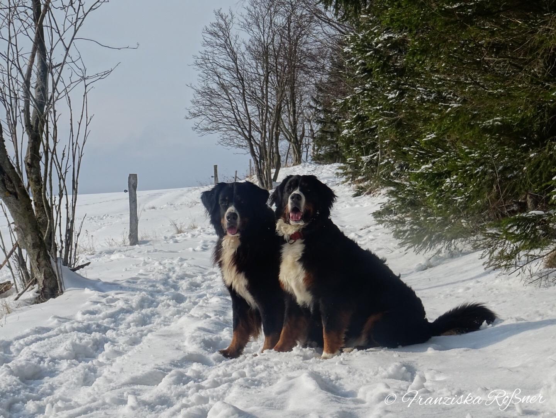 Winterspaziergang im Erzgebirge