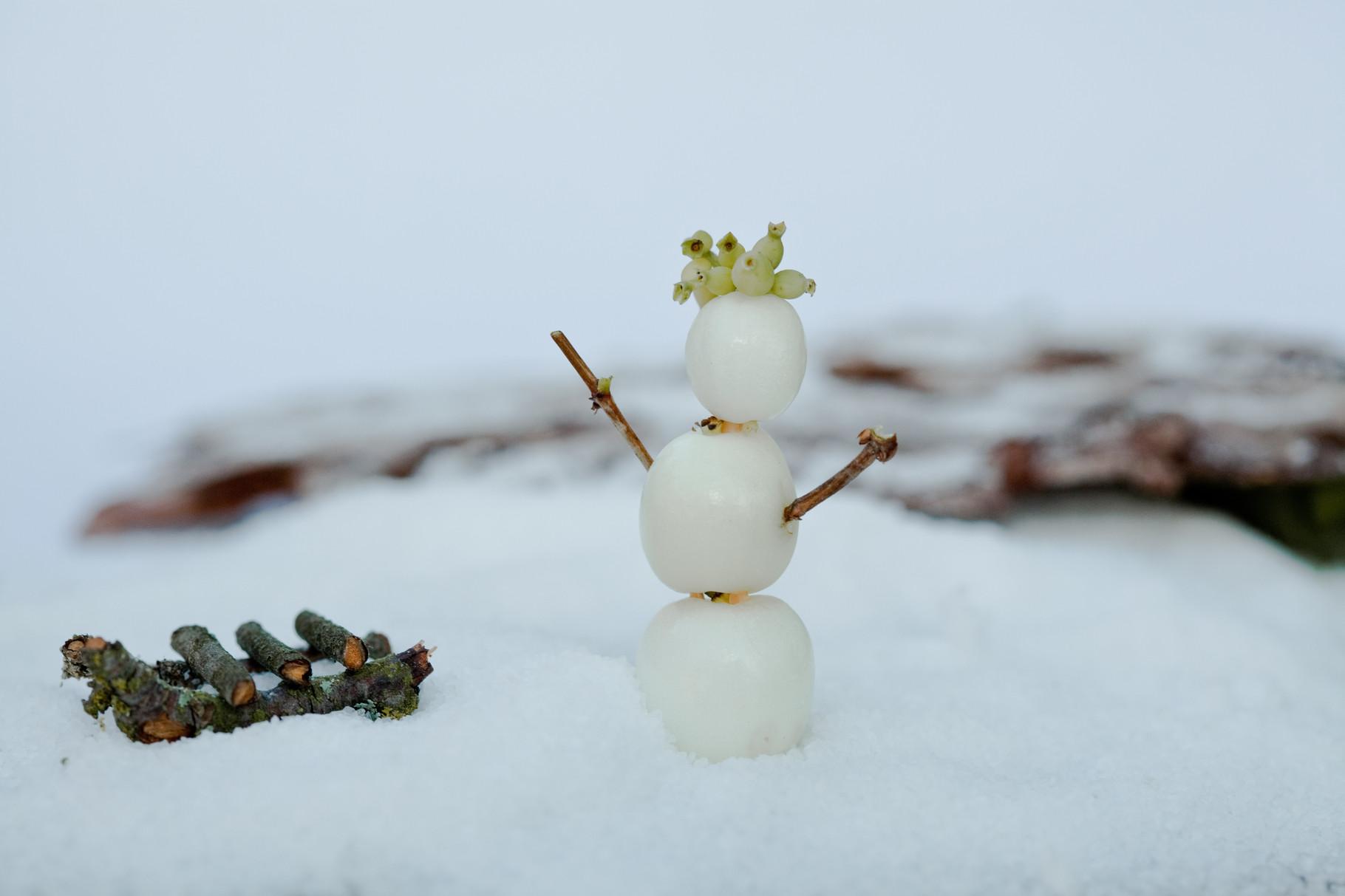 Winter-Knallerbse © Knallerbsenhof
