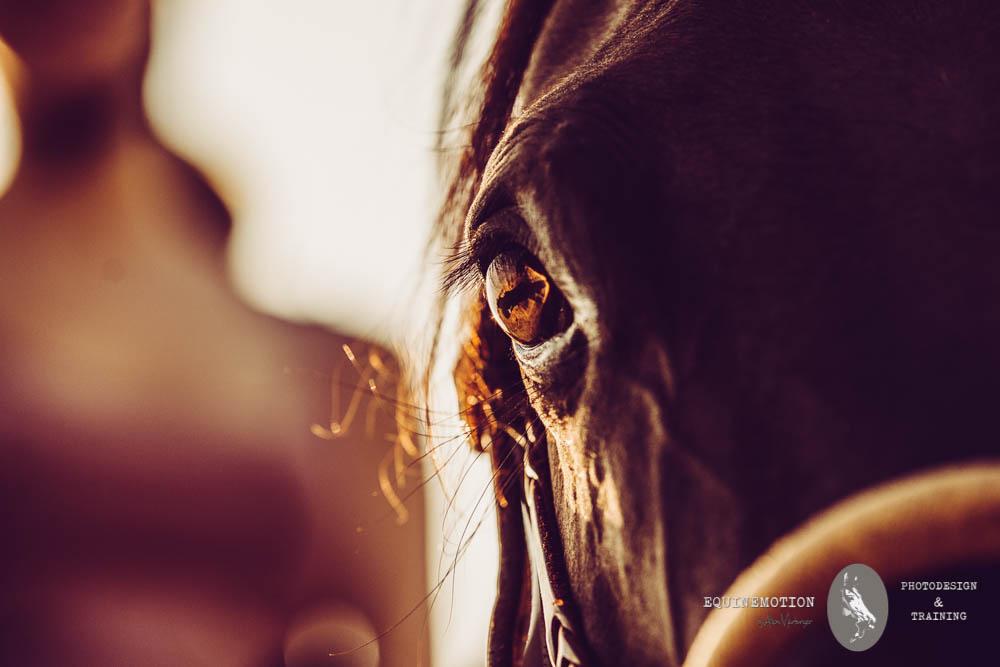 Alison Marburger: Galerie der Pferdefotografin aus dem Münsterland. Pferde, Hunde und vieles mehr