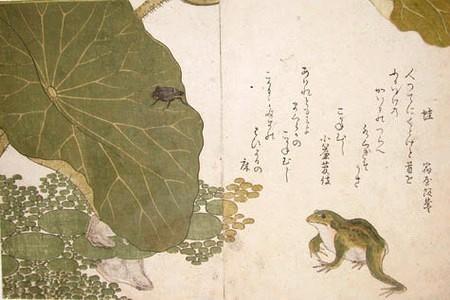 Grenouille et scarabée (Kitagawa Utamaro 1788)