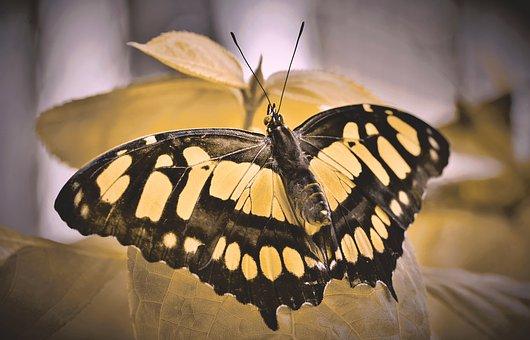 Aux Pieds Enchantés, Réflexologie, Susanne Seguin, Reflexologue, Huiles essentielles, Soin métamorphique, Domancy, Sallanches