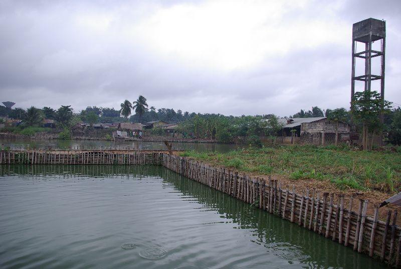 Etangs de pisciculture