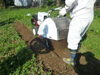雑草の除去