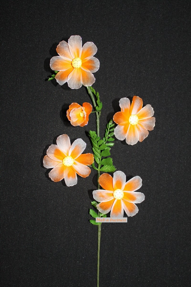 Cosmos orange dégradé blanc