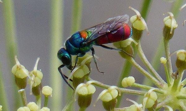 Photo © Brigitte Emmery / Galerie du Monde des insectes / www.galerie-insecte.org. CC BY-NC (2019)