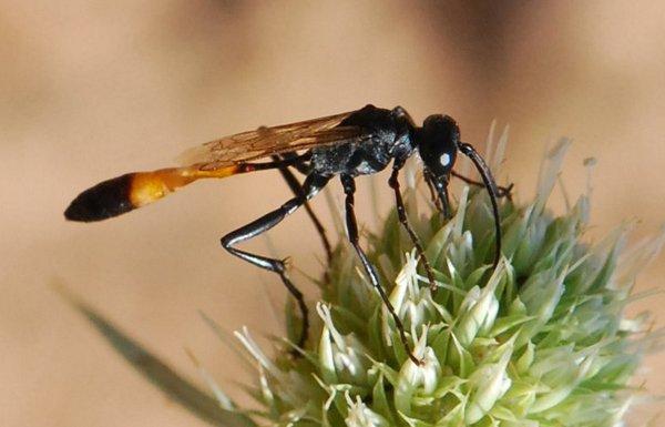 Photo © Maite Santisteban Rivero / Galerie du Monde des insectes / www.galerie-insecte.org. CC BY-NC (2019)
