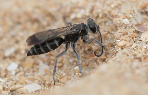Photo © Michel Clemot / Galerie du Monde des insectes / www.galerie-insecte.org. CC BY-NC (2019)