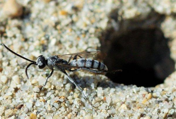 Photo © RUILLAT Christian / Galerie du Monde des insectes / www.galerie-insecte.org. CC BY-NC (2019)