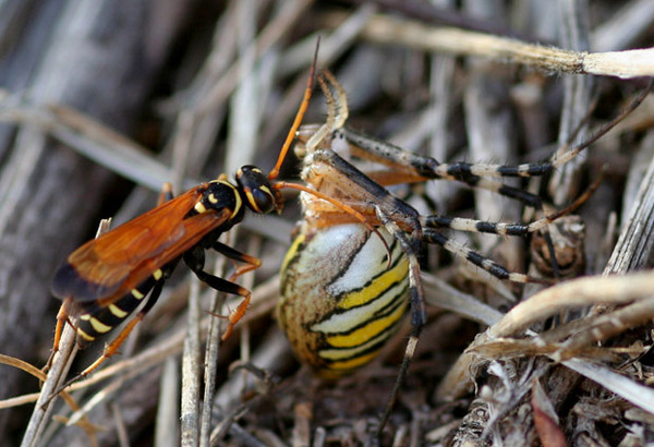 Photo © Franck BEAUPERE / Galerie du Monde des insectes / www.galerie-insecte.org. CC BY-NC (2019)