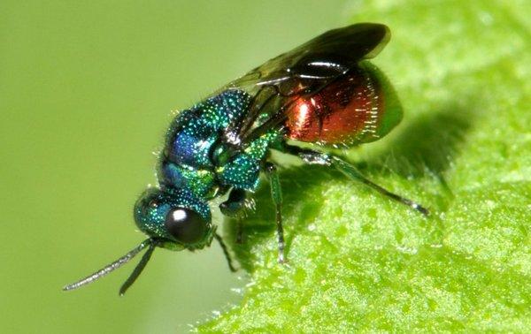 Photo © René Savary / Galerie du Monde des insectes / www.galerie-insecte.org. CC BY-NC (2019)