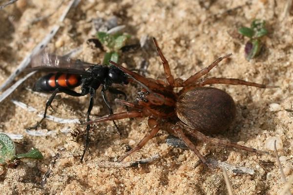 Photo © Sylvain Houpert / Galerie du Monde des insectes / www.galerie-insecte.org. CC BY-NC (2019)