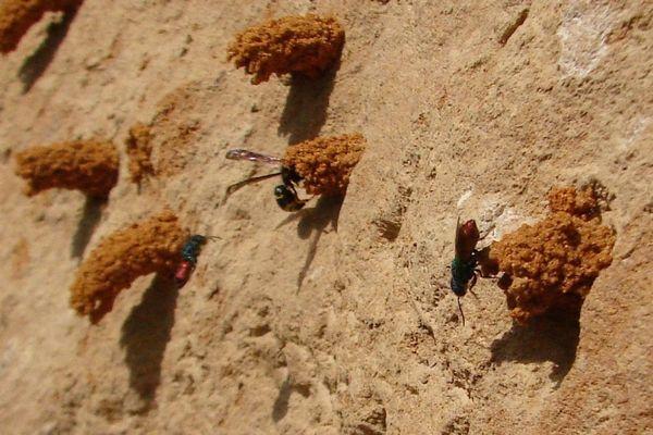 Photo © Phil / Galerie du Monde des insectes / www.galerie-insecte.org. CC BY-NC (2019)
