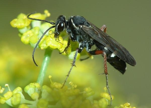 Photo © Gauthier / Galerie du Monde des insectes / www.galerie-insecte.org. CC BY-NC (2019)