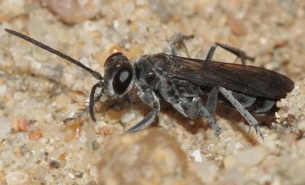Photo © Jérémie Lemarié / Galerie du Monde des insectes / www.galerie-insecte.org. CC BY-NC (2019)