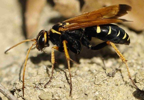 Photo © Brigitte / Galerie du Monde des insectes / www.galerie-insecte.org. CC BY-NC (2019)