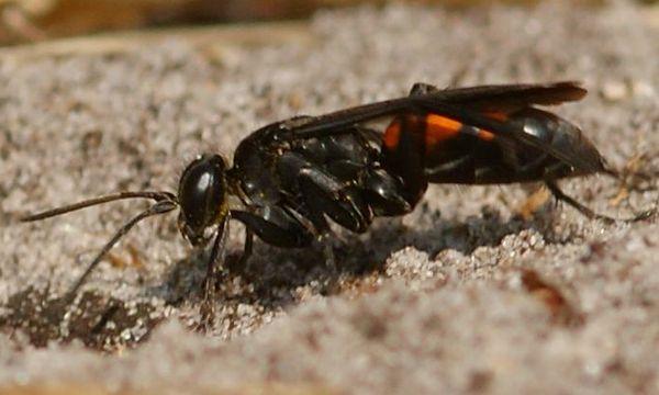 Photo © Guillaume Larregle / Galerie du Monde des insectes / www.galerie-insecte.org. CC BY-NC (2019)
