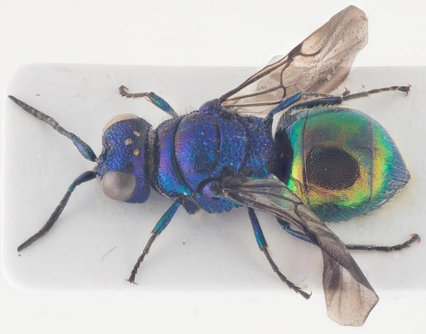 Photo Arnstein Staverløkk / Norsk institutt for naturforskning. CC BY 3.0