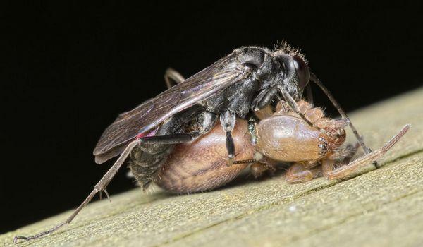 Photo © Pierre Bornand / Galerie du Monde des insectes / www.galerie-insecte.org. CC BY-NC (2019)