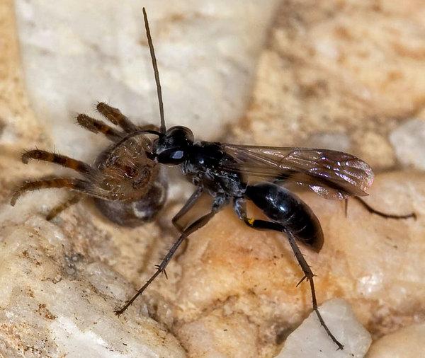 Photo © BAUDEVIN Jean-Christ / Galerie du Monde des insectes / www.galerie-insecte.org. CC BY-NC (2019)