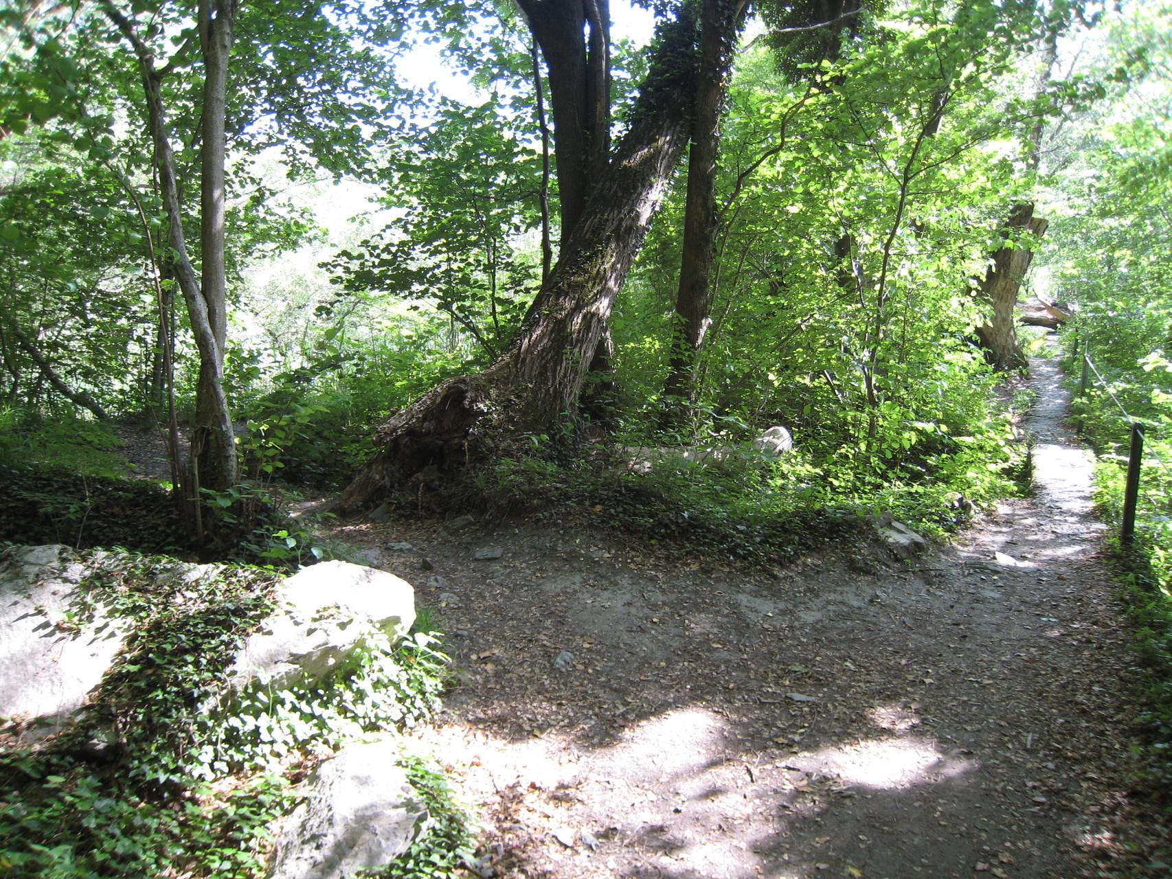 Typischer Trail