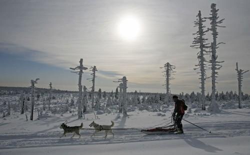 Hundegespannrennen in Adlergebirge -  Šediváčkův long