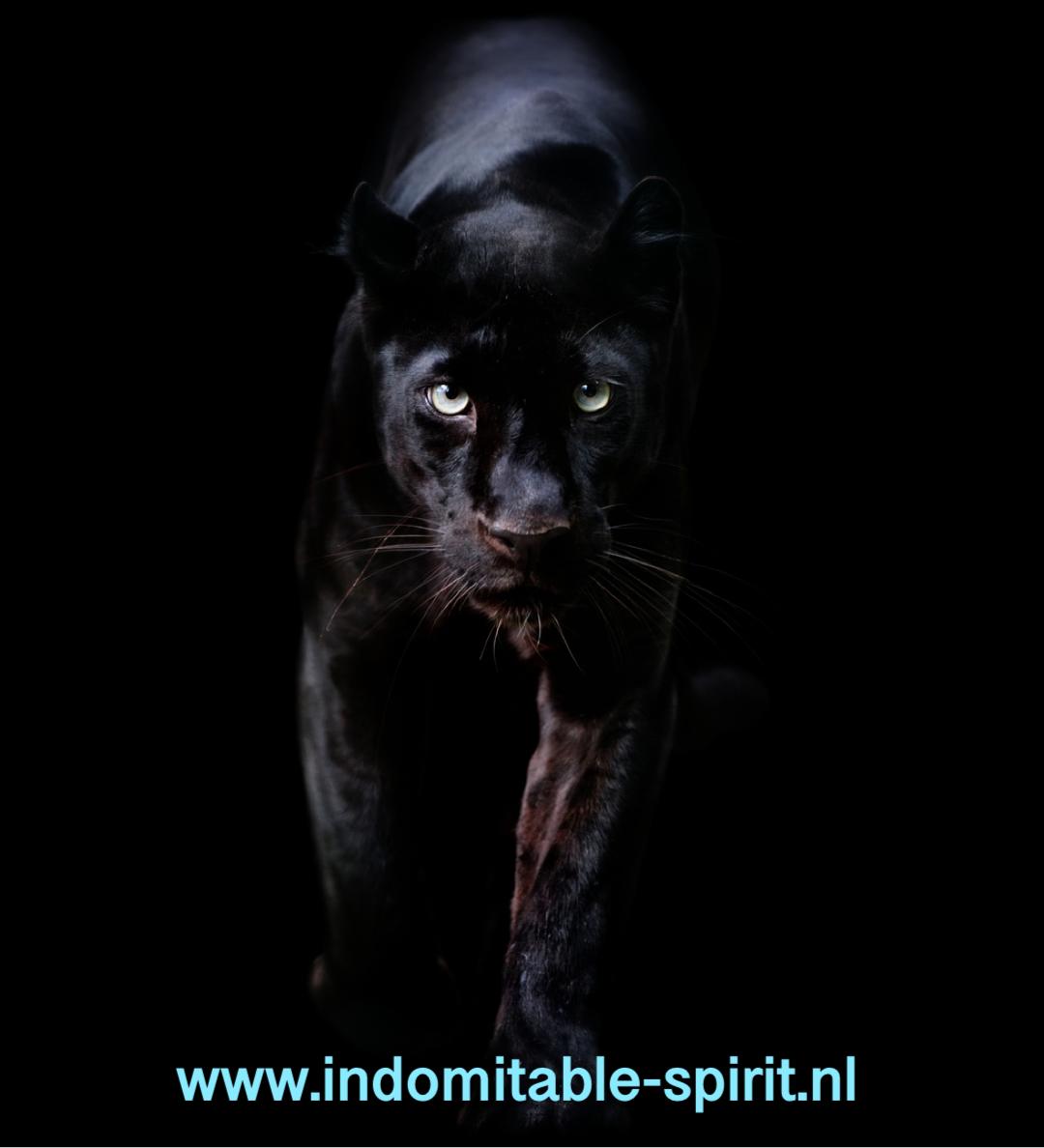 Blog Indomitable spirit