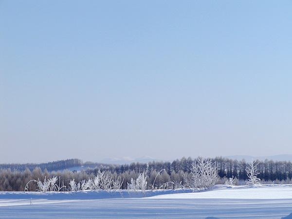 雪原と氷の枯れ草
