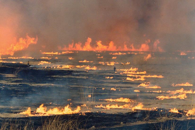 渡良瀬遊水池 ヨシ焼き 野焼き