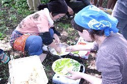 色鮮やかな野草の天ぷら