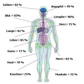 Wasserverteilung im Körper eines Menschen