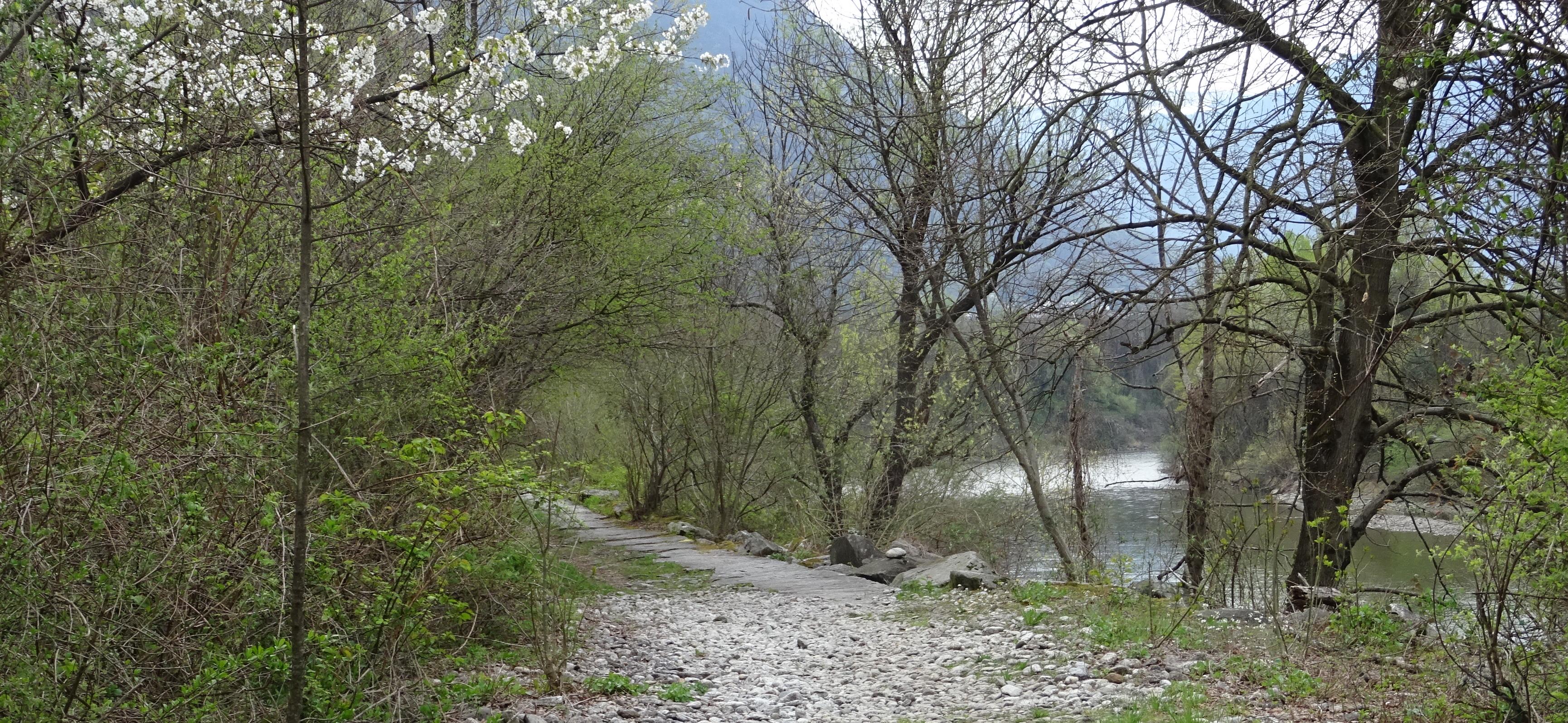 der Uferweg dem Ticino entlang