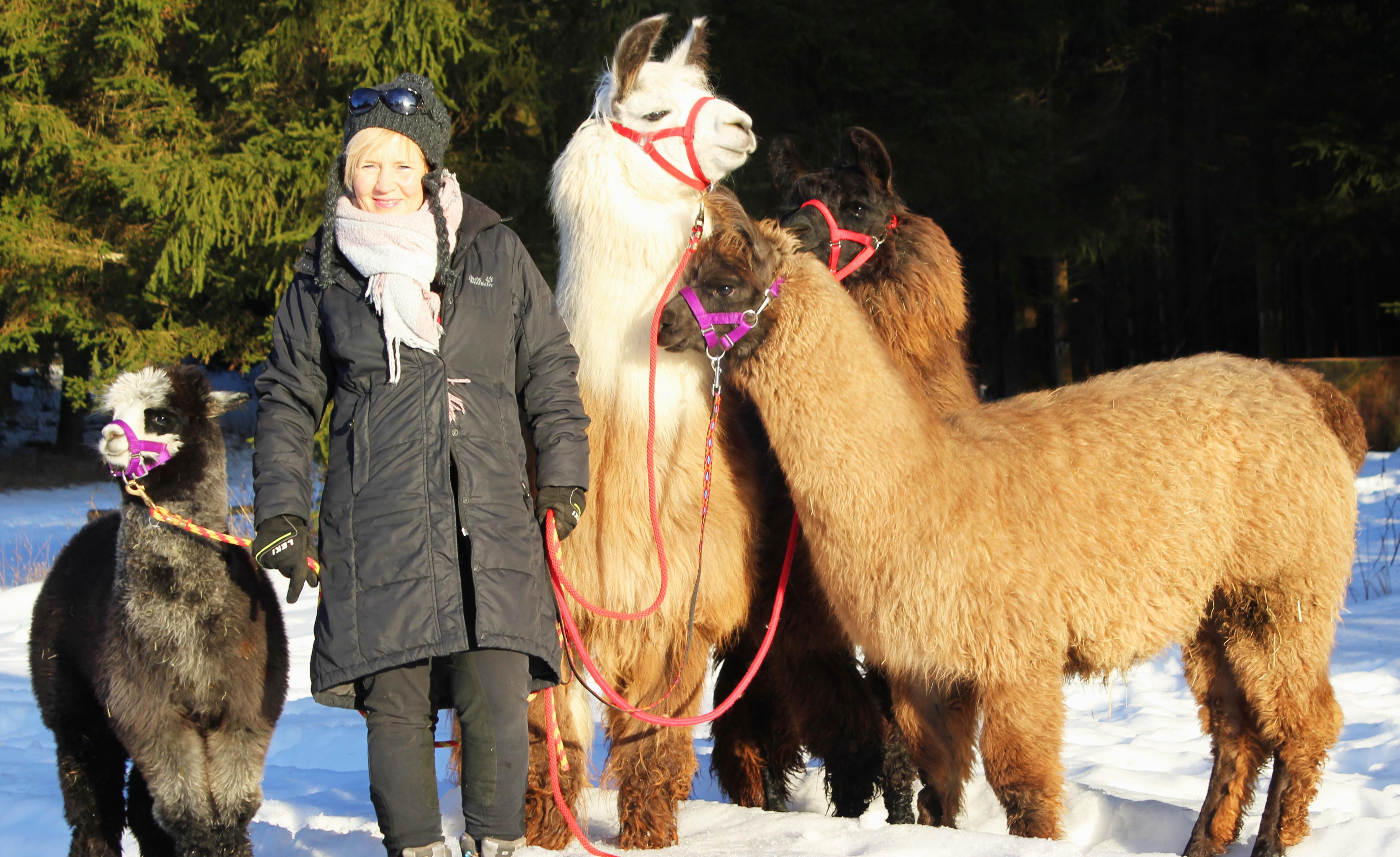 Wandern Mit Lama Alpaka In Bayern Lapakaktiv Aktiv Mit Alpakas Und Lamas