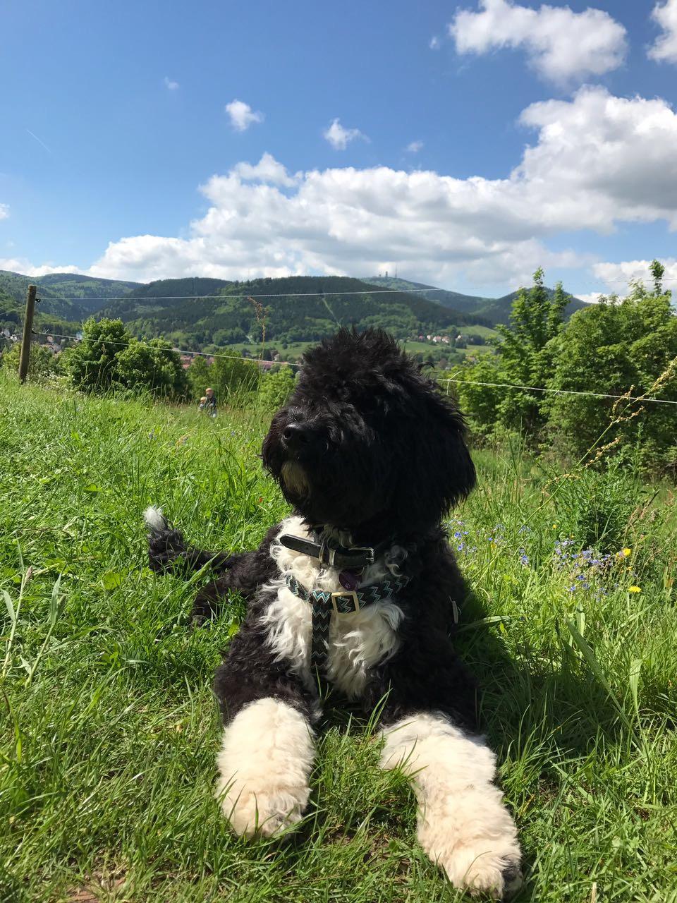 Galina macht Pause auf einer Bergwiese