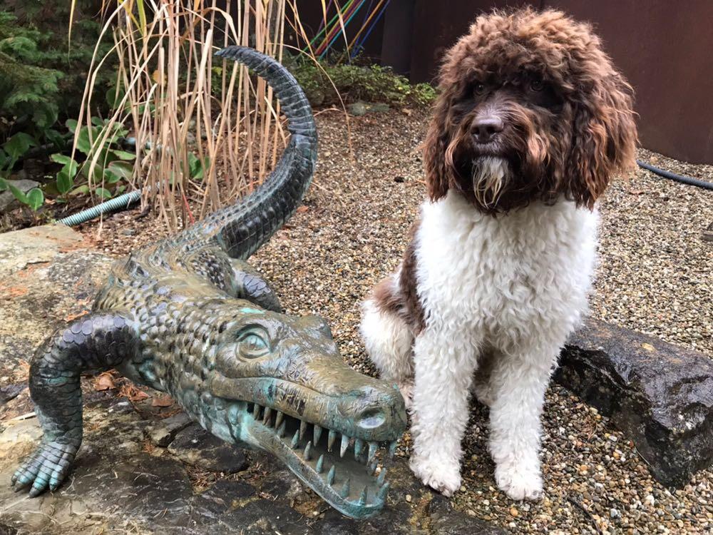 Gilbo macht sich als Krokodilflüsterer perfekt