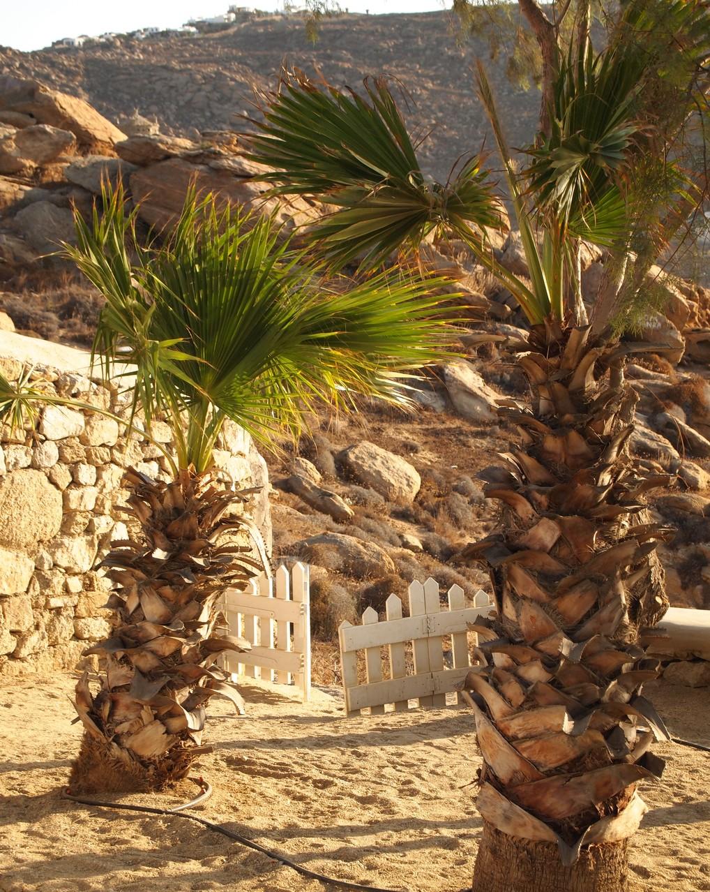 Mykonos - Hotel San Giorgio - Palm Garden - BYRH Beach Bags
