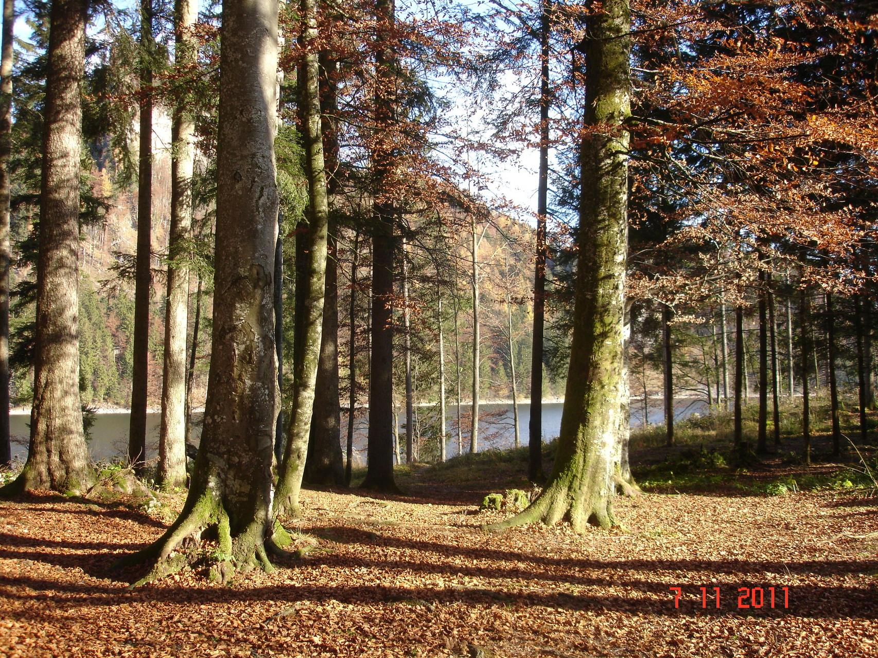 Herbstwald Schwarzensee