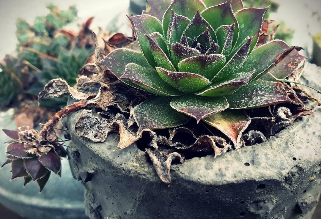 es friert so langsam im Hortus Aquaveganum