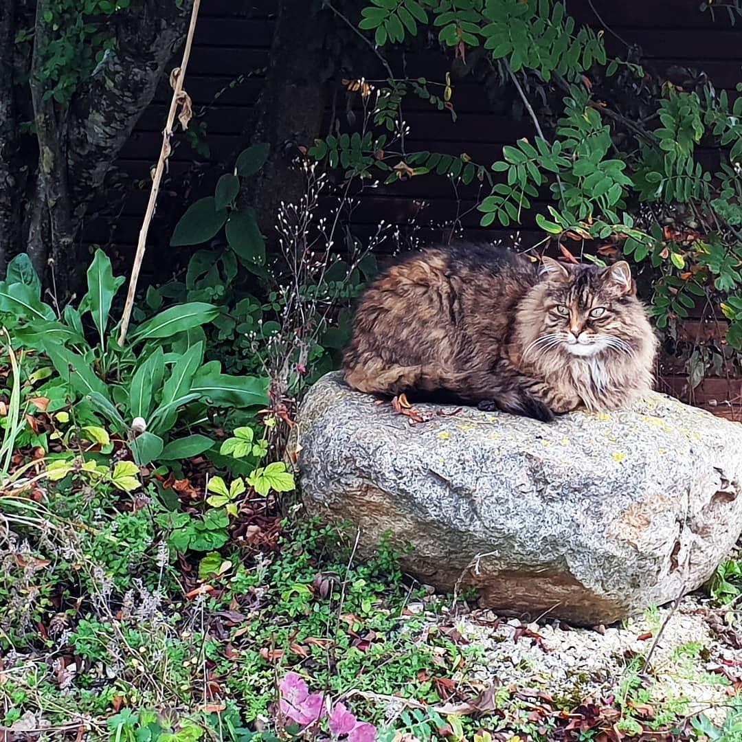 Lucy beim Sonnen im Spätsommer