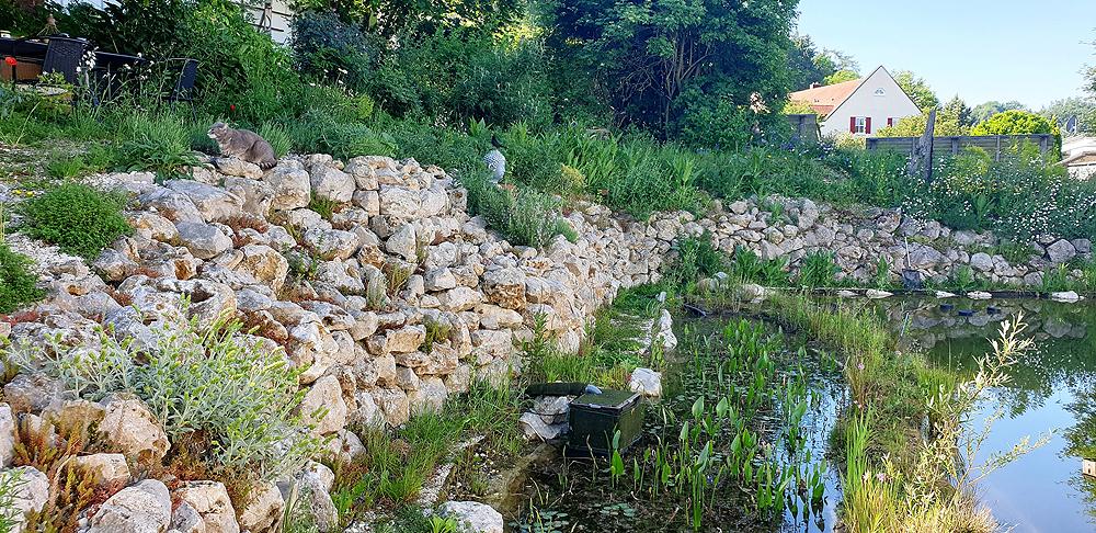 Trockenmauer am Schwimmteich