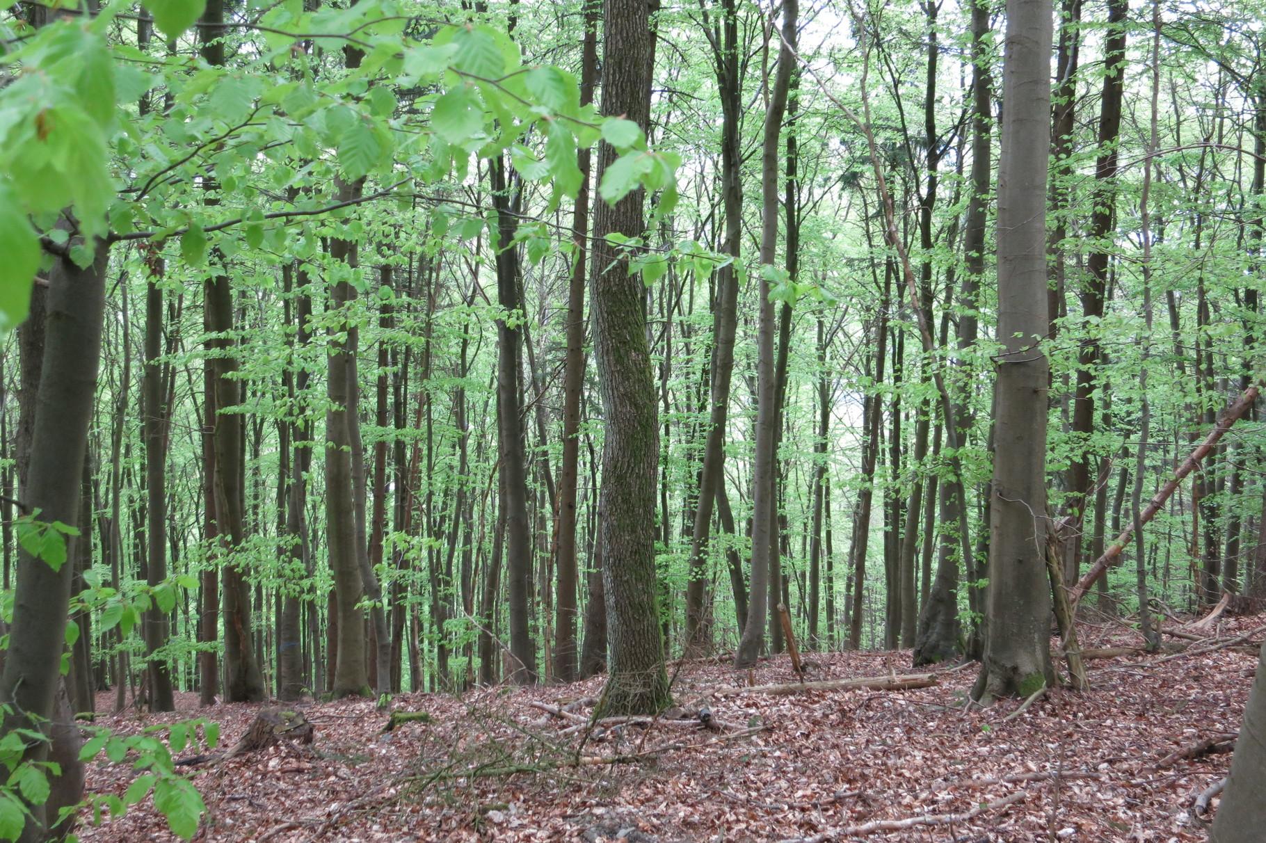 Waldspaziergang am Mühlenberg
