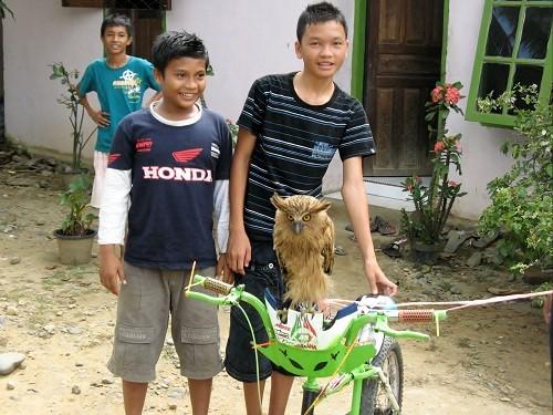 Fahrradeule auf Sumatra