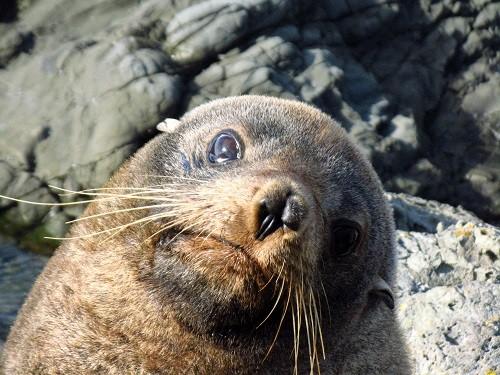 Neuseelands Tierwelt ist berauschend
