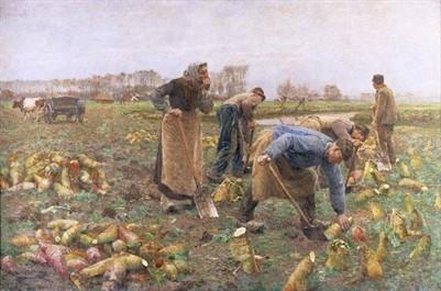Emile Claus: Beet harvest