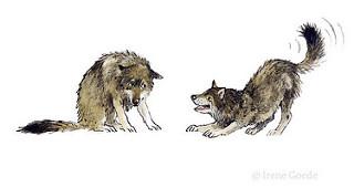 Irene Goede; Wolves