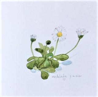 Daisy, Annette Fienieg 7-4-20