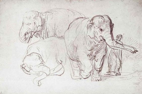 Rembrandt van Rijn: olifant