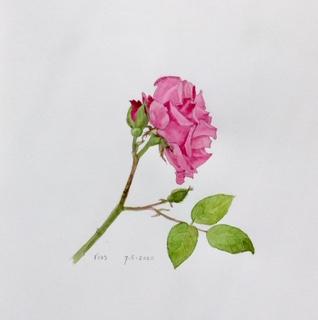 Annette Fienieg: Rose